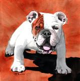 Bulldog, watercolor - 7 x 7