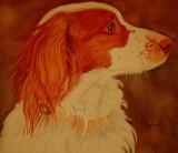 Jeb, watercolor - 8 x 10