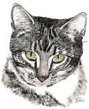 Tiger, ink, watercolor - 6.5 x 6.5