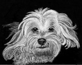 Dolly - charcoal, 8 x 11