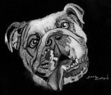Bulldog - charcoal, 8 x 11