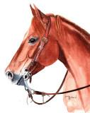 Quarter Horse Gelding - watercolor,  8 x 9