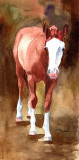 Quarter Horse Foal - watercolor, 5 x 11