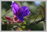Flower - Whitford Road