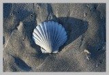 Shell at the Beach