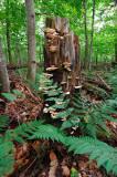 catskills stump