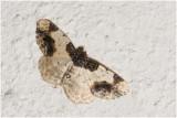 aangebrande Spanner - Ligdia adustata