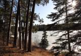 Preachers Grove shoreline in spring copy.jpg