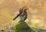 Squirrel and cone copy.jpg