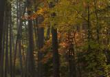 Wilderness drive colors copy.jpg