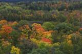 Fire Tower view in fall II copy.jpg