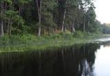 Mary Lake shoreline copy.jpg