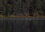Mary Lake Swan morning copy.jpg