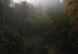Foggy morning 1 mile from the Headwaters copy.jpg