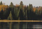Fall shoreline with wild rice copy.jpg