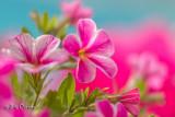 Nature et Fleurs...