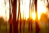 Humid Summer Sunset in Nauvoo