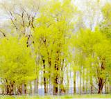Spring along the Mississippi