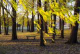 Autumn Breeze in the Nauvoo Grove
