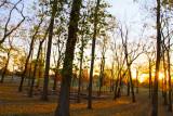 Sunset in the Nauvoo Grove