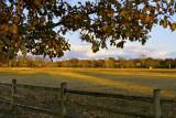 Nauvoo Pasture in Autumn, 1843
