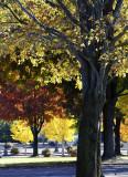 Vibrant Autumn Color
