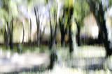 Fairyland Grove