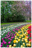 Keukenhof Gardens 3