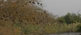 Weaver nests - Wevernesten