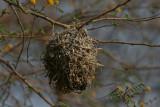Weaver nest - Wevernest