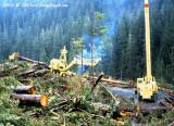 Washington Side at Soderberg Logging