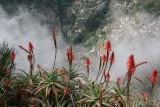 Curral Freiras,Madeira