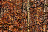 Hunters Creek 3