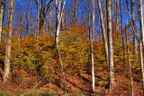 Hunters Creek 4