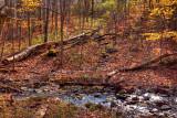 Hunters Creek 5