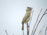 vireos_and_warblers