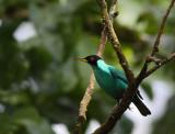 >> Nicaragua 2011 <<