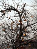 Last year's apples