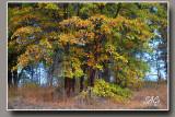 Black-Oak-stand.jpg