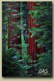 Sequoia-Forest.jpg