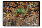 Yucca-on-Sandstone.jpg