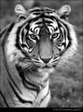 Animals (Black and White)
