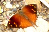 Butterfly San-Isidro