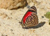 Butterfly Chiqal road