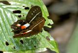 Butterfly Playa del Oro