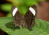 Butterfly Playa del Oro3