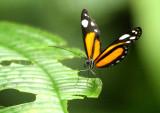 Butterfly Playa del Oro4