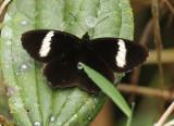 Butterfly San Isidro3