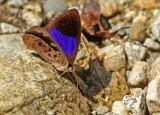 Butterfly Yankuam6a