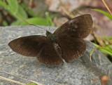 Butterfly-San-Isidro3.jpg
